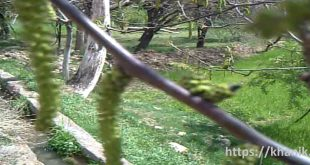 نمایی از مزرعه خانیک فروردین۱۳۸۵+فیلم